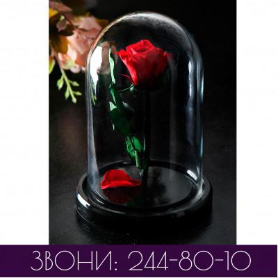 Роза в колбе МИНИ одноцветная (основные цвета)