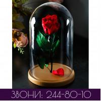 Роза в колбе СТАНДАРТ одноцветная (основные цвета)