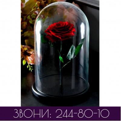 Роза в колбе ПРЕМИУМ одноцветная (основные цвета)